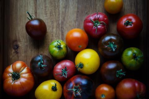 Warberg Tomat